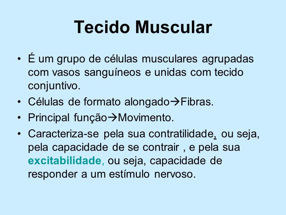 Tecido Muscular É um grupo de células musculares agrupadas com vasos sanguíneos e unidas com tecido conjuntivo. Células de formato alongado Fibras. Pr