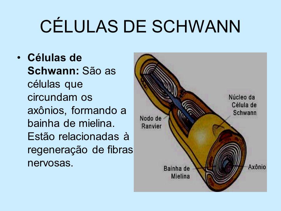 CÉLULAS DE SCHWANN Células de Schwann: São as células que circundam os axônios, formando a bainha de mielina. Estão relacionadas à regeneração de fibr