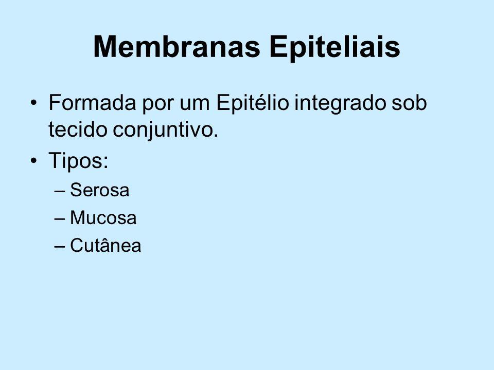 Membranas Epiteliais Formada por um Epitélio integrado sob tecido conjuntivo. Tipos: –Serosa –Mucosa –Cutânea