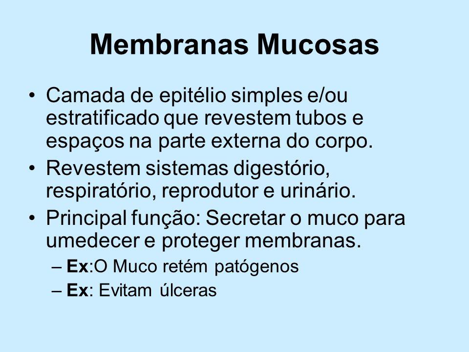 Membranas Mucosas Camada de epitélio simples e/ou estratificado que revestem tubos e espaços na parte externa do corpo. Revestem sistemas digestório,