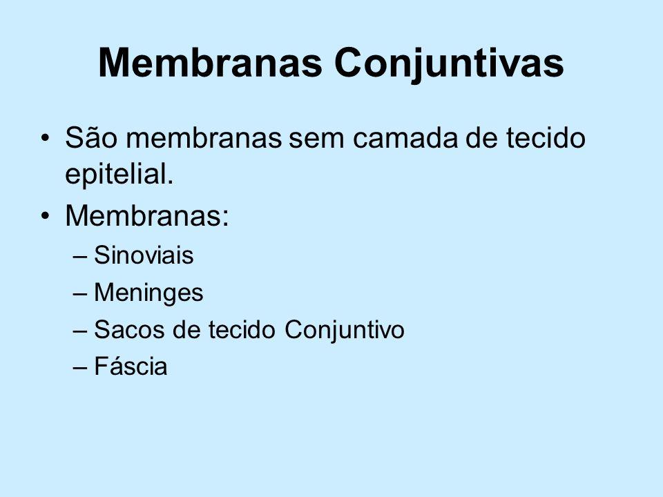 Membranas Conjuntivas São membranas sem camada de tecido epitelial. Membranas: –Sinoviais –Meninges –Sacos de tecido Conjuntivo –Fáscia