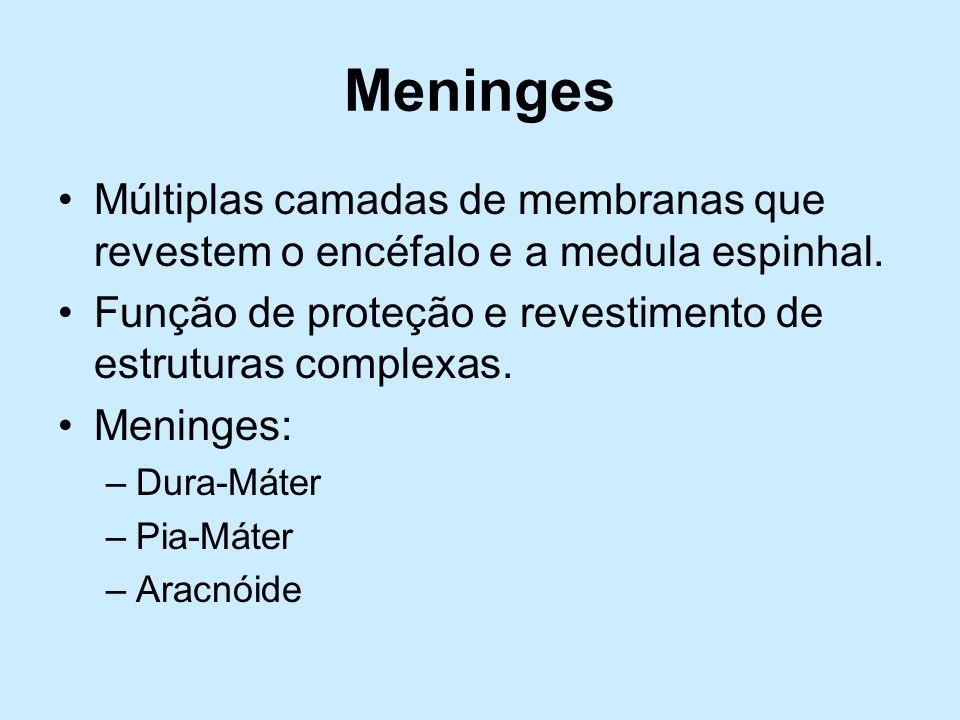 Meninges Múltiplas camadas de membranas que revestem o encéfalo e a medula espinhal. Função de proteção e revestimento de estruturas complexas. Mening