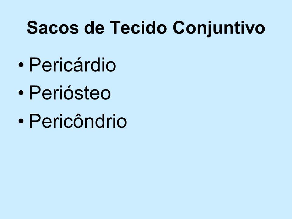 Sacos de Tecido Conjuntivo Pericárdio Periósteo Pericôndrio
