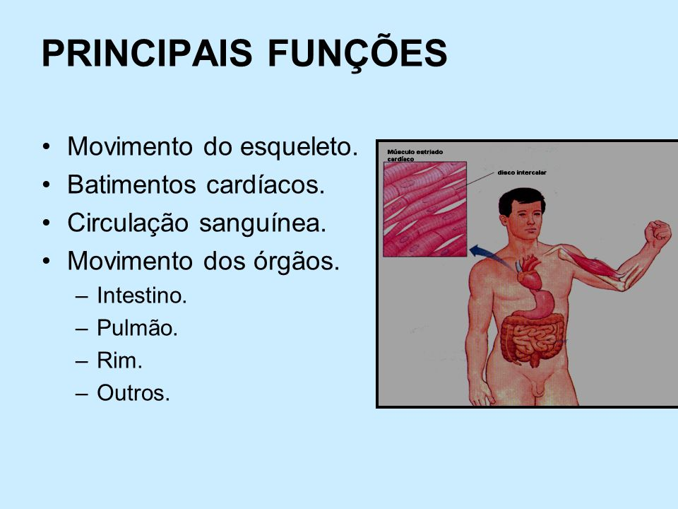 PRINCIPAIS FUNÇÕES Movimento do esqueleto. Batimentos cardíacos. Circulação sanguínea. Movimento dos órgãos. –Intestino. –Pulmão. –Rim. –Outros.
