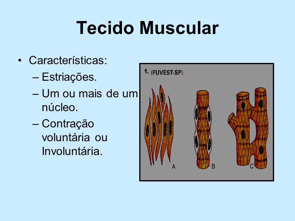 Tecido Muscular Características: –Estriações. –Um ou mais de um núcleo. –Contração voluntária ou Involuntária.