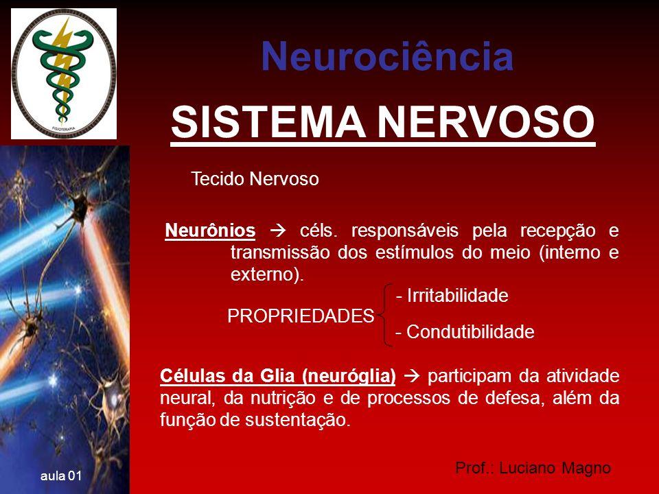 Prof.: Luciano Magno aula 01 NEURÔNIOS Compostos por: Corpo celular (pericário) Dendritos Axônio Neurociência
