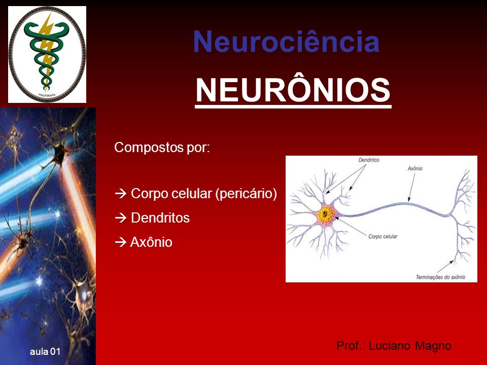 Prof.: Luciano Magno aula 01 NEURÔNIOS De acordo com o tamanho e a forma dos seus prolongamentos, os neurônios são classificados em neurônios: multipolares p.ex.: grande maioria bipolares p.ex.: interneurônios pseudo-unipolares p.ex.: gânglios espinhais Neurociência