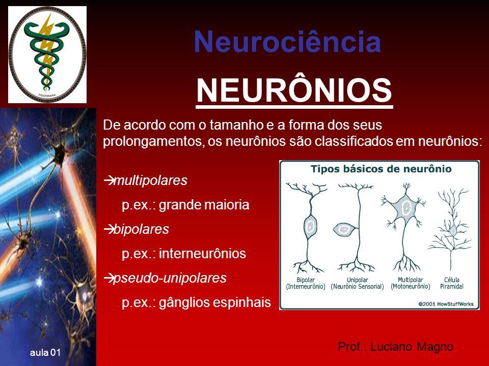 Prof.: Luciano Magno aula 01 NEURÔNIOS Ainda são classificados segundo a sua função: Neurônios motores Neurônios sensitivos Interneurônios Neurociência