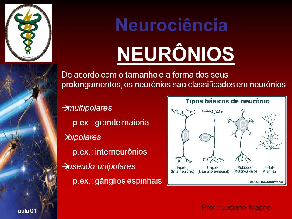 Prof.: Luciano Magno aula 01 SINAPSES QUÍMICAS IMPULSO NERVOSO O Terminal axonal e as Sinapses O terminal axonal típico contém dúzias de pequenas vesículas membranosas esféricas que armazenam neurotransmissores - as vesículas sinápticas.