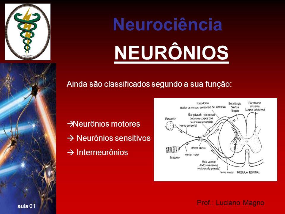 Prof.: Luciano Magno aula 01 NEUROTRANSMISSORES Ácido glutâmico ou glutamato: principal neurotransmissor estimulador do SNC.
