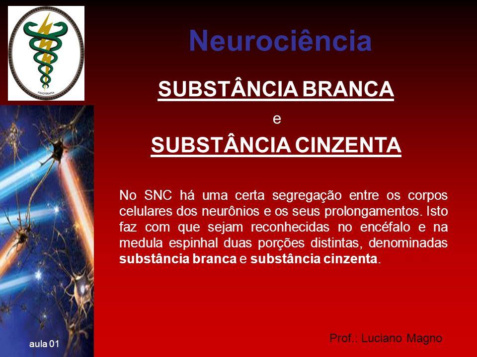 Prof.: Luciano Magno aula 01 SUBSTÂNCIA BRANCA Não contém corpos celulares de neurônios, sendo constituída por prolongamentos de neurônios e por células da glia.