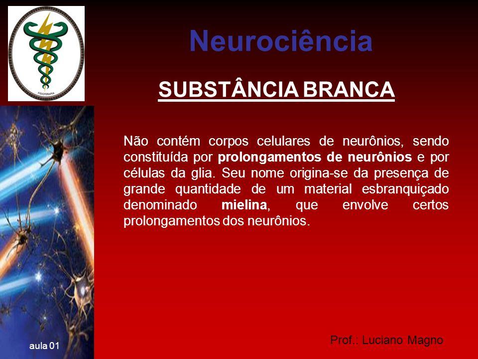 Prof.: Luciano Magno aula 01 SUBSTÂNCIA CINZENTA É assim chamada porque mostra essa coloração quando observada macroscopicamente.