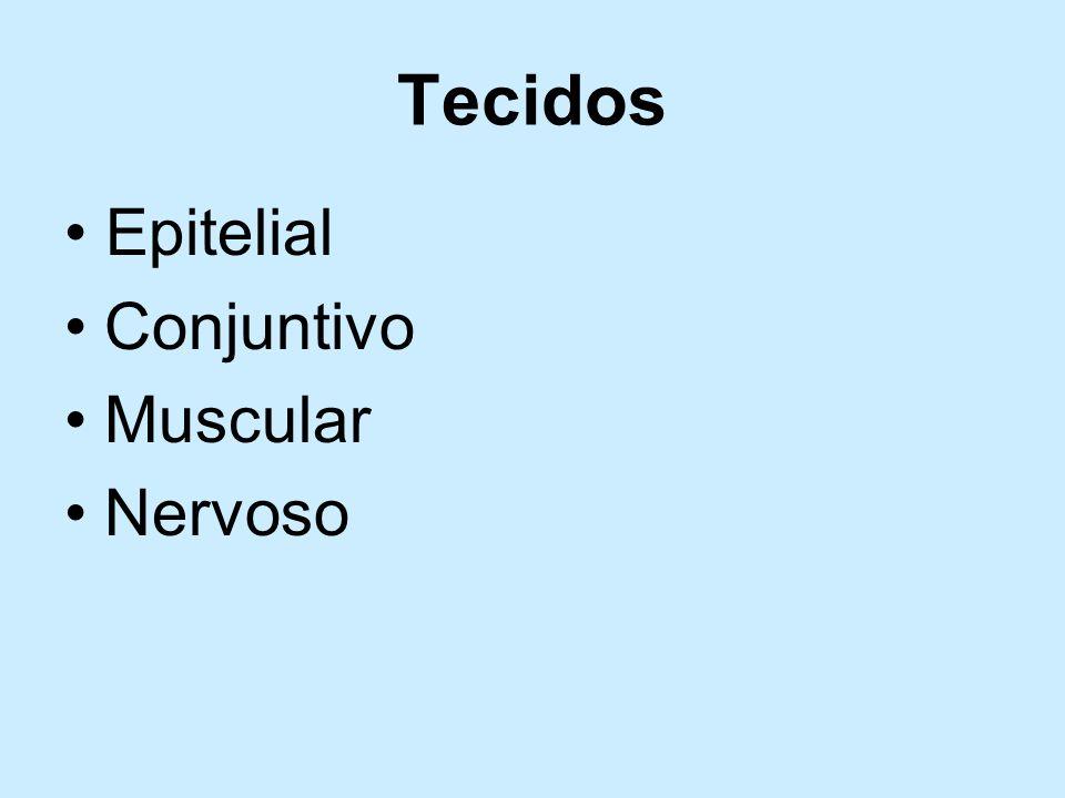 Tecidos Epitelial Conjuntivo Muscular Nervoso