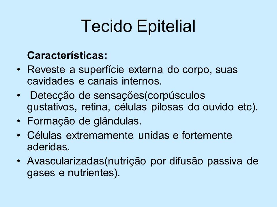 Tecido Epitelial Características: Reveste a superfície externa do corpo, suas cavidades e canais internos. Detecção de sensações(corpúsculos gustativo