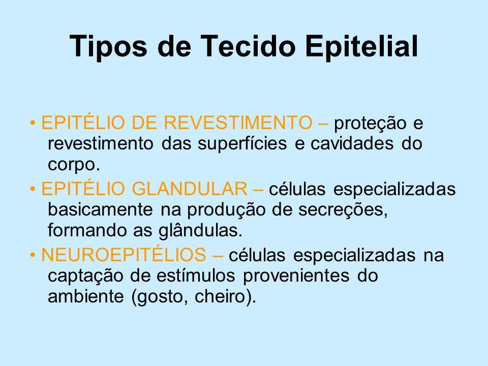 Tipos de Tecido Epitelial EPITÉLIO DE REVESTIMENTO – proteção e revestimento das superfícies e cavidades do corpo. EPITÉLIO GLANDULAR – células especi