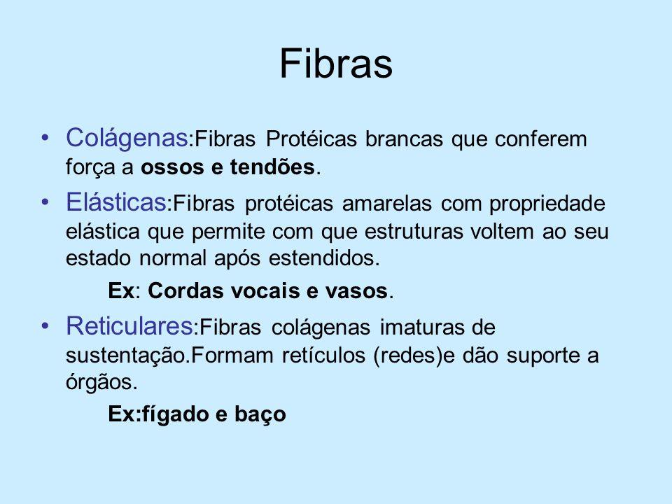 Fibras Colágenas :Fibras Protéicas brancas que conferem força a ossos e tendões. Elásticas :Fibras protéicas amarelas com propriedade elástica que per