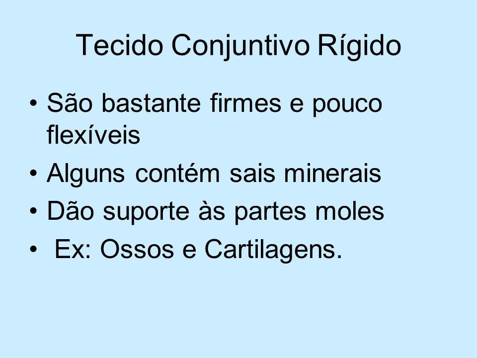 Tecido Conjuntivo Rígido São bastante firmes e pouco flexíveis Alguns contém sais minerais Dão suporte às partes moles Ex: Ossos e Cartilagens.