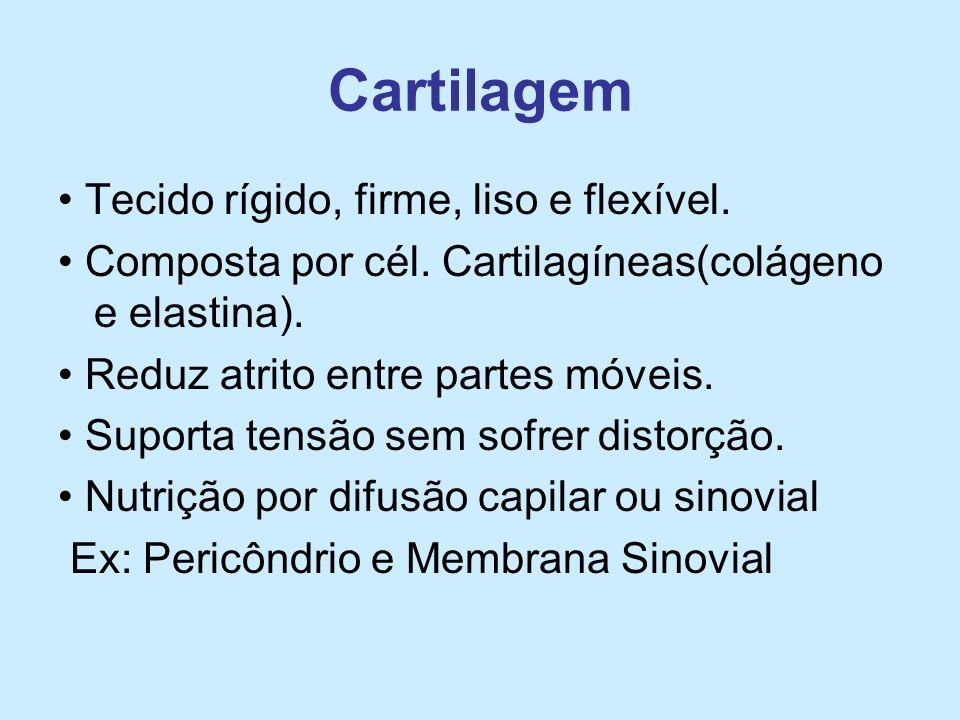 Cartilagem Tecido rígido, firme, liso e flexível. Composta por cél. Cartilagíneas(colágeno e elastina). Reduz atrito entre partes móveis. Suporta tens