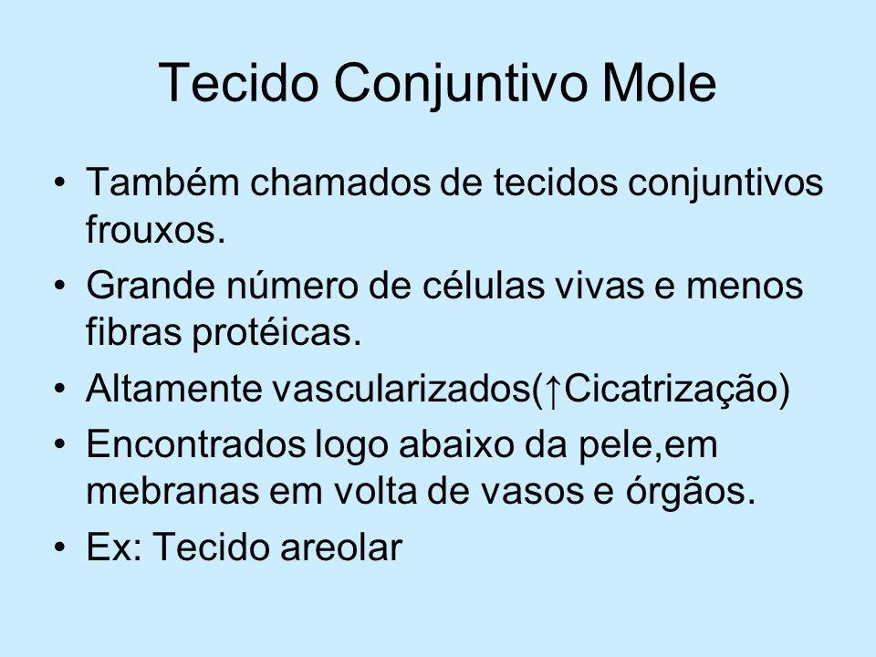 Tecido Conjuntivo Mole Também chamados de tecidos conjuntivos frouxos. Grande número de células vivas e menos fibras protéicas. Altamente vascularizad