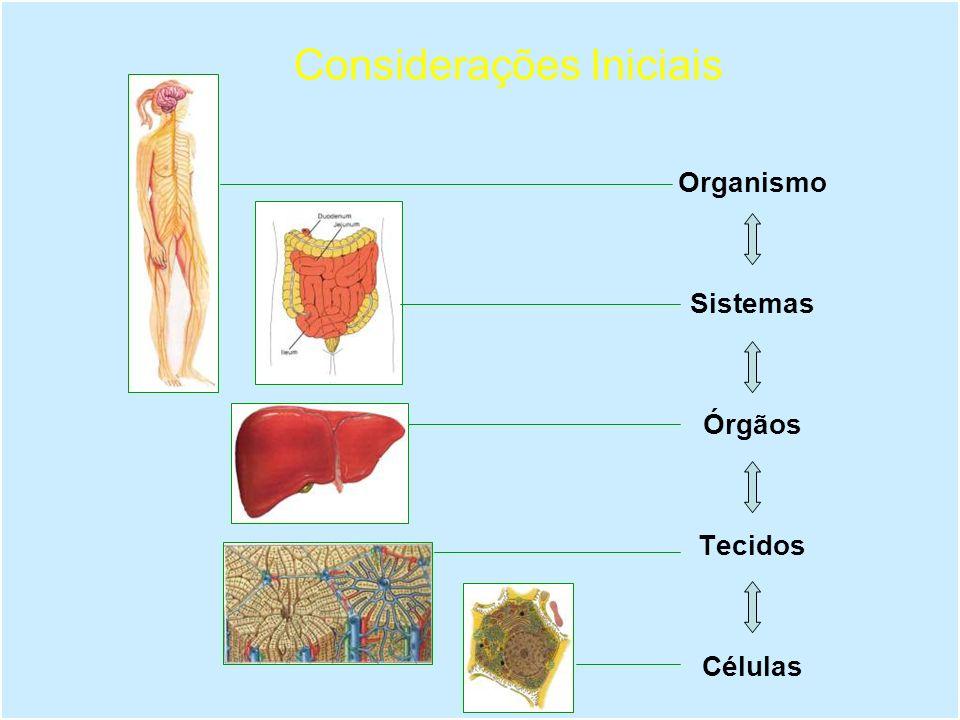 Metabolismo Atividade celular responsável pela degradação e geração de energia para produção de moléculas essenciais.
