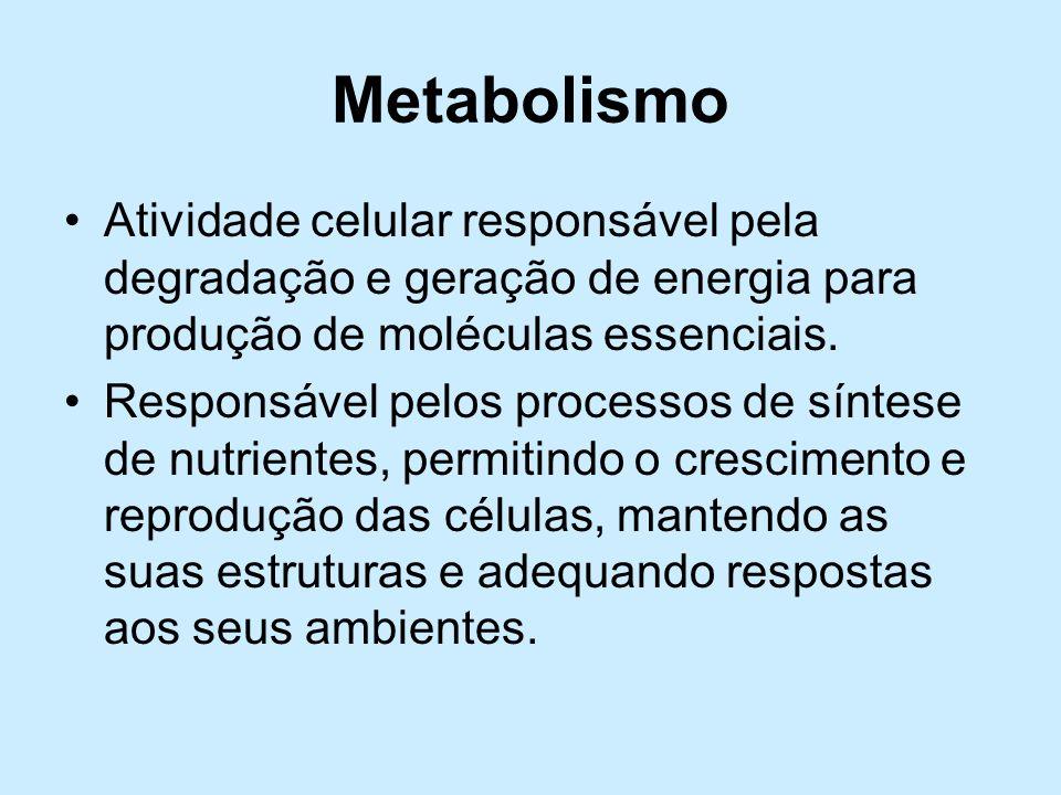 Metabolismo Atividade celular responsável pela degradação e geração de energia para produção de moléculas essenciais. Responsável pelos processos de s