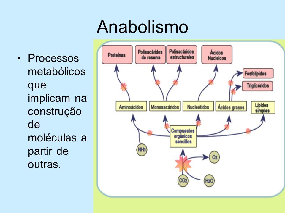 Anabolismo Processos metabólicos que implicam na construção de moléculas a partir de outras.