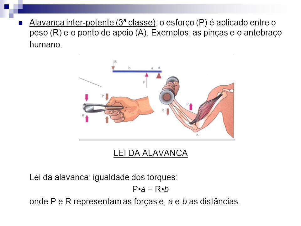 Alavanca inter-potente (3ª classe): o esforço (P) é aplicado entre o peso (R) e o ponto de apoio (A). Exemplos: as pinças e o antebraço humano. LEI DA