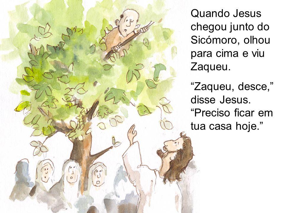 Quando Jesus chegou junto do Sicómoro, olhou para cima e viu Zaqueu. Zaqueu, desce, disse Jesus. Preciso ficar em tua casa hoje.