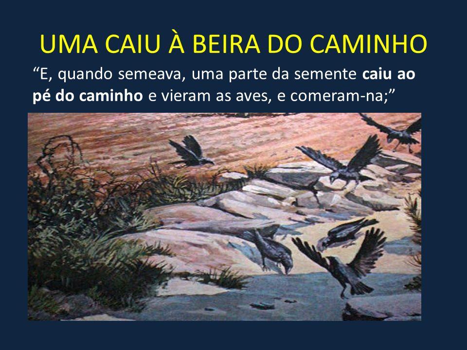 UMA CAIU À BEIRA DO CAMINHO E, quando semeava, uma parte da semente caiu ao pé do caminho e vieram as aves, e comeram-na;
