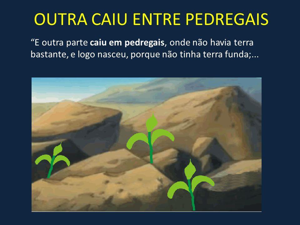 OUTRA CAIU ENTRE PEDREGAIS E outra parte caiu em pedregais, onde não havia terra bastante, e logo nasceu, porque não tinha terra funda;...