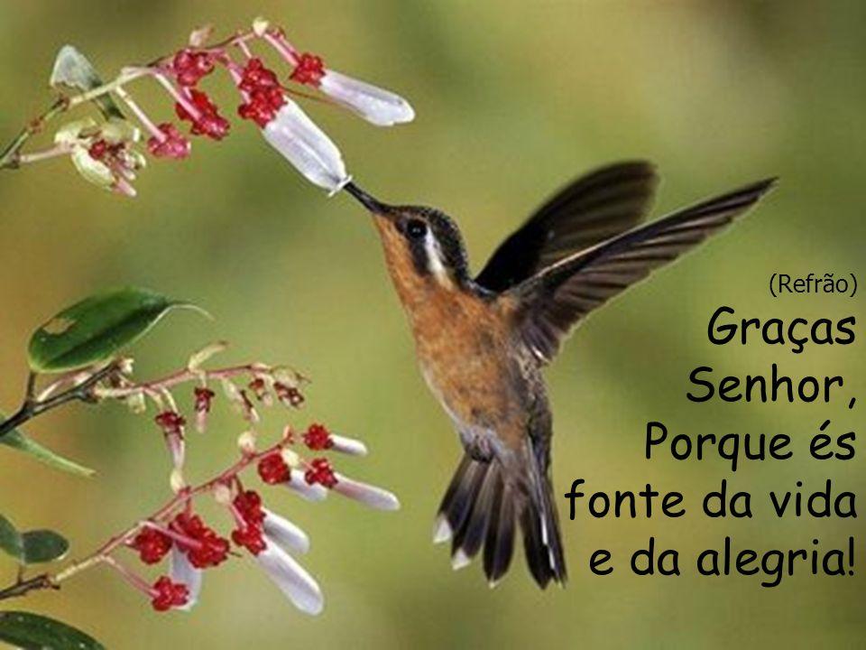 (Meninas) Abramos o coração à alegria, como se abrem as flores à Primavera, para receberem a vida.