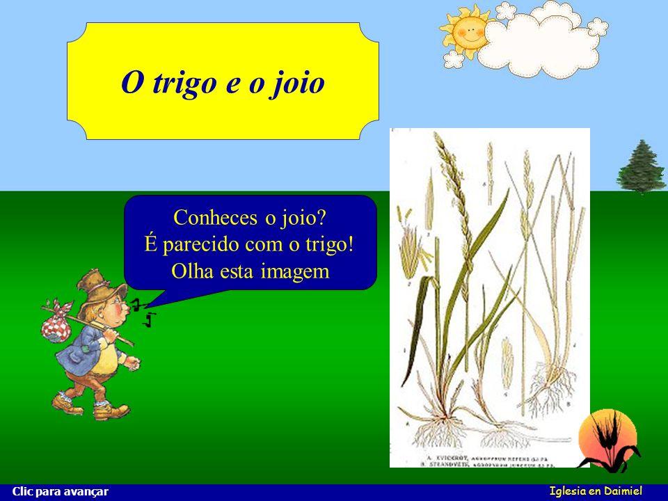 Iglesia en Daimiel O trigo e o joio Conheces o joio.
