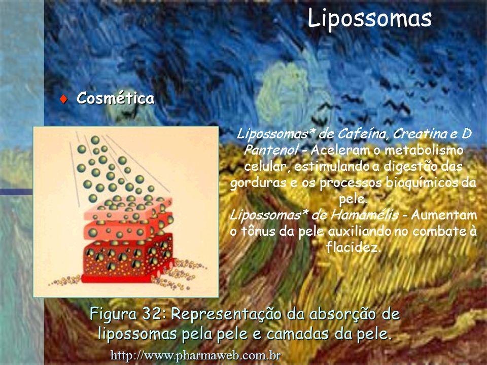 Figura 32: Representação da absorção de lipossomas pela pele e camadas da pele. Cosmética Cosmética Lipossomas* de Cafeína, Creatina e D Pantenol - Ac