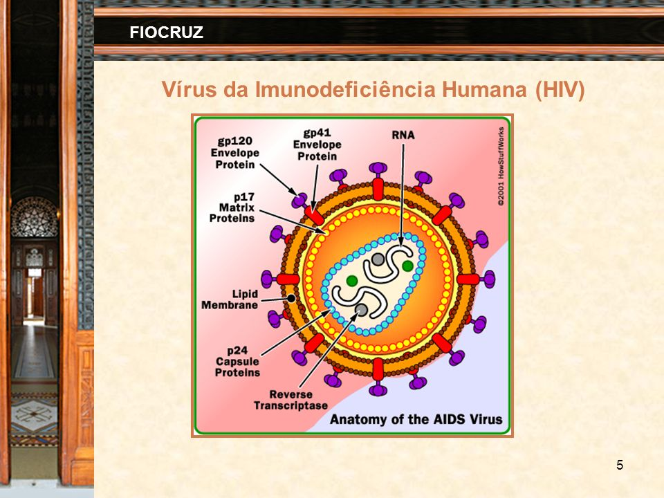 6 FIOCRUZ Ciclo de vida do HIV