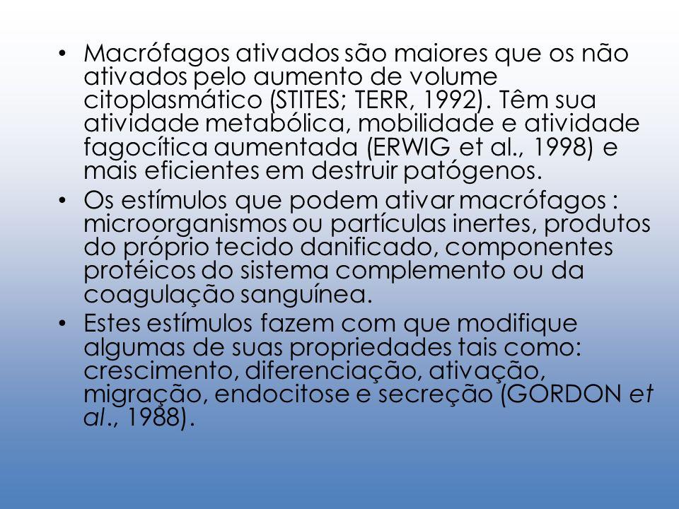 Macrófagos ativados são maiores que os não ativados pelo aumento de volume citoplasmático (STITES; TERR, 1992). Têm sua atividade metabólica, mobilida