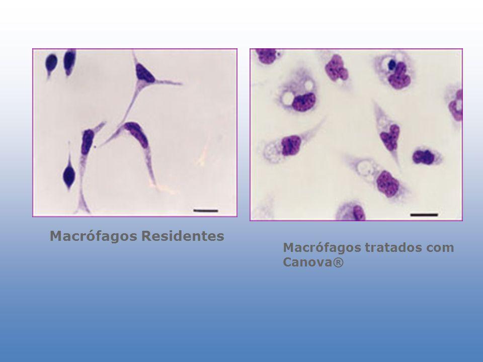 Macrófagos Residentes Macrófagos tratados com Canova®