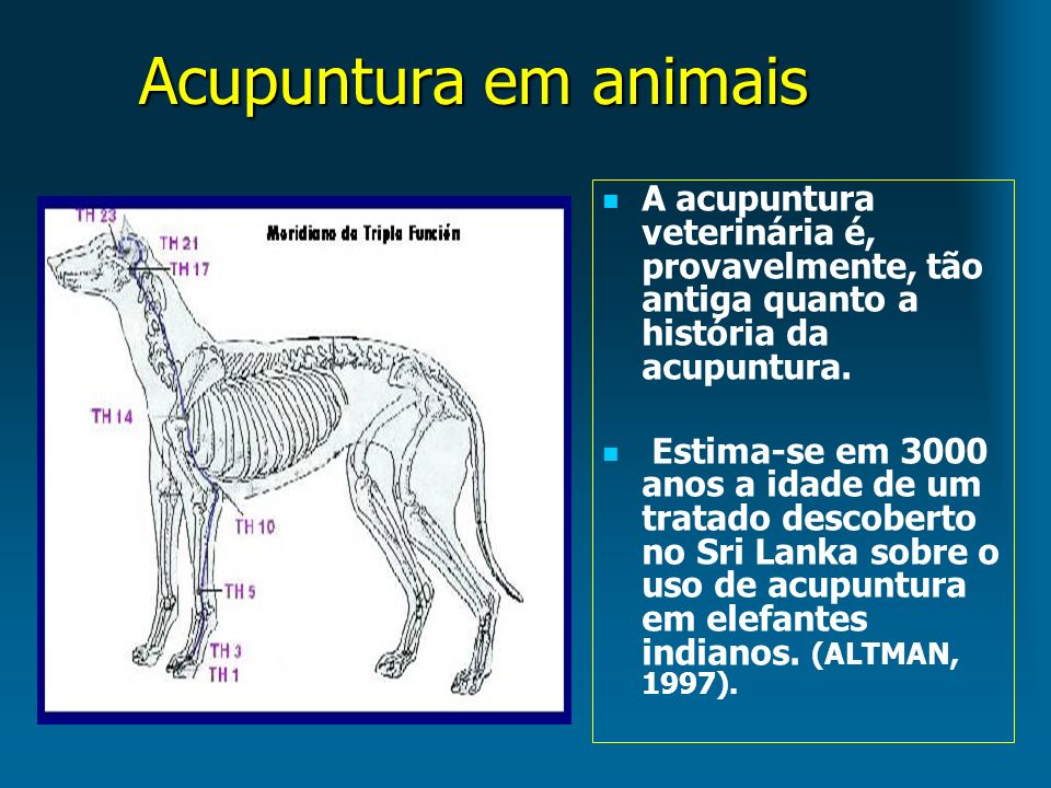 Acupuntura em animais A acupuntura veterinária é, provavelmente, tão antiga quanto a história da acupuntura. Estima-se em 3000 anos a idade de um trat