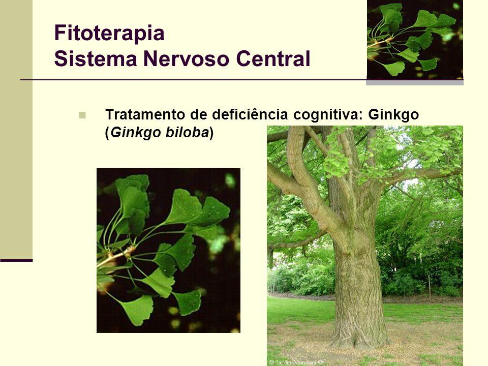 Fitoterapia Sistema Nervoso Central Tratamento de deficiência cognitiva: Ginkgo (Ginkgo biloba)