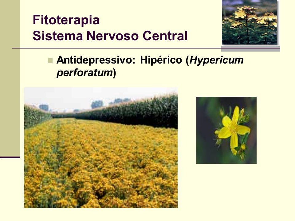 Fitoterapia Sistema Nervoso Central Antidepressivo: Hipérico (Hypericum perforatum)