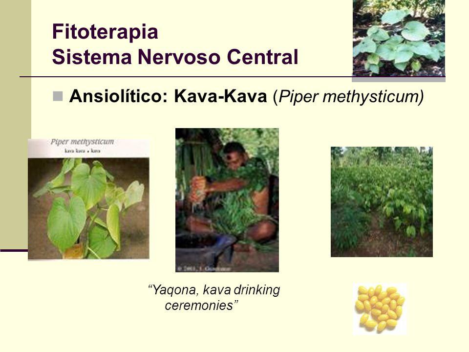 Fitoterapia Sistema Nervoso Central Ansiolítico: Kava-Kava (Piper methysticum) Yaqona, kava drinking ceremonies