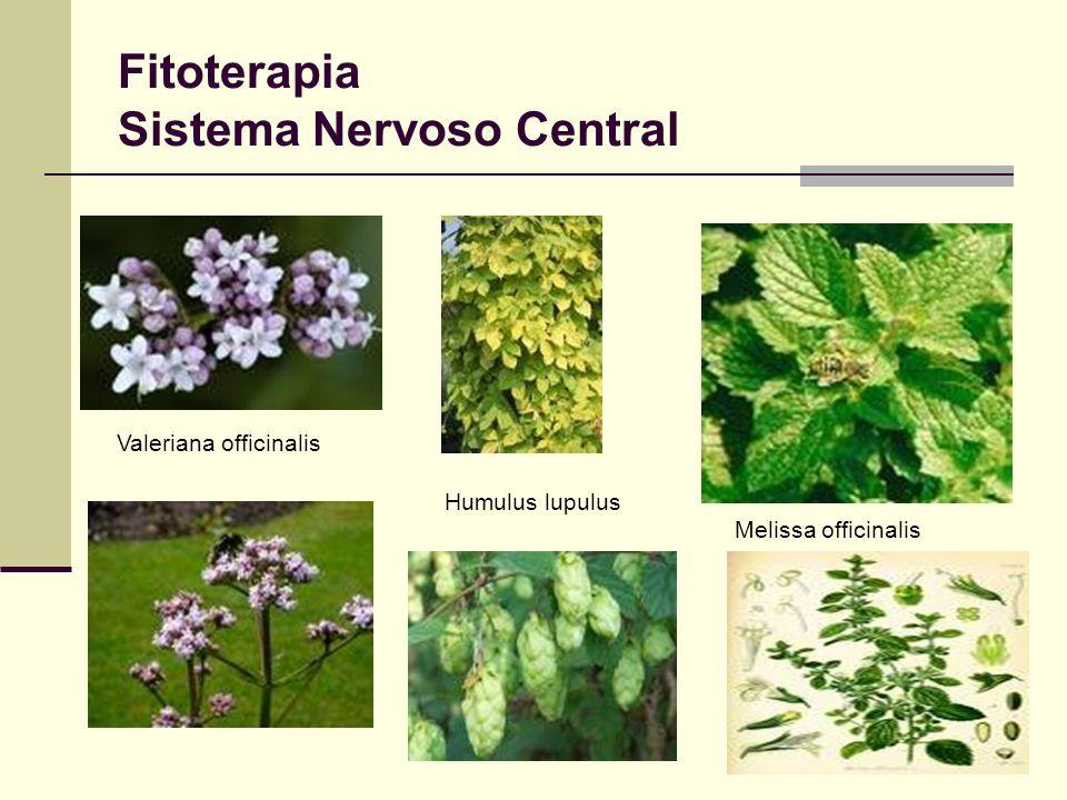 Fitoterapia Sistema Nervoso Central Valeriana officinalis Humulus lupulus Melissa officinalis