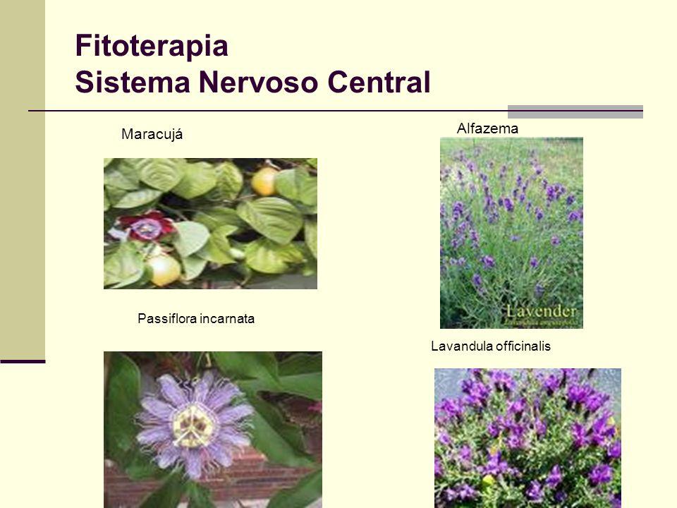 Fitoterapia Sistema Nervoso Central Maracujá Alfazema Lavandula officinalis Passiflora incarnata