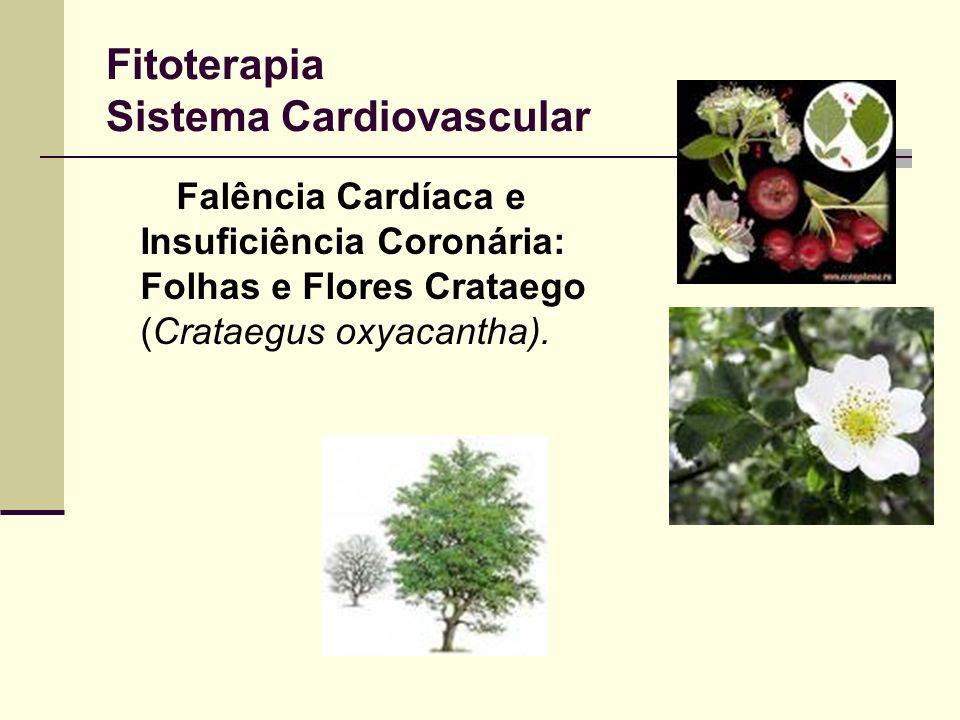 Fitoterapia Sistema Cardiovascular Falência Cardíaca e Insuficiência Coronária: Folhas e Flores Crataego (Crataegus oxyacantha).