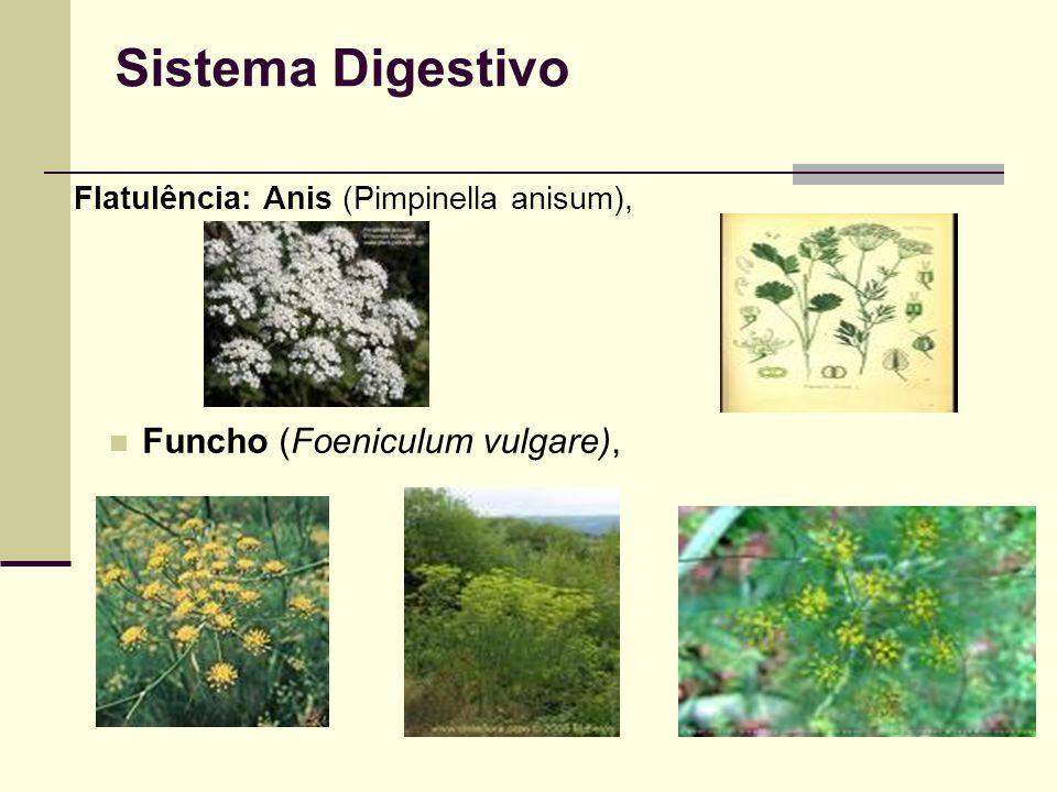 Sistema Digestivo Flatulência: Anis (Pimpinella anisum), Funcho (Foeniculum vulgare),