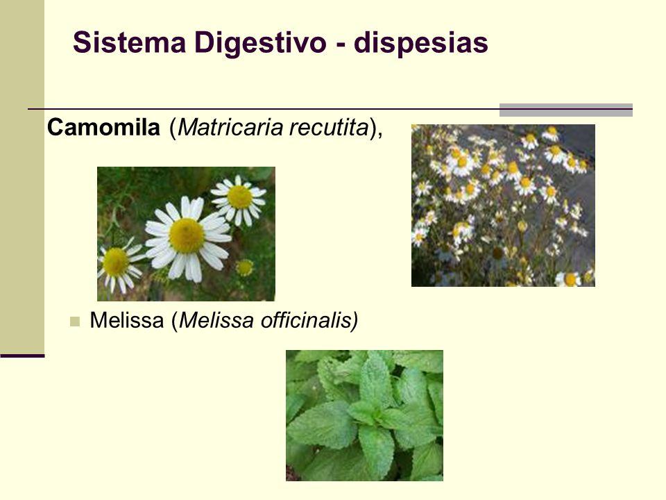 Sistema Digestivo - dispesias Camomila (Matricaria recutita), Melissa (Melissa officinalis)