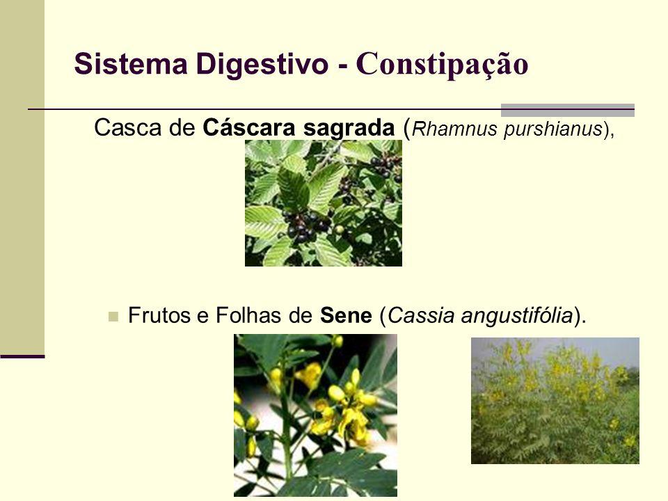 Sistema Digestivo - Constipação Casca de Cáscara sagrada ( Rhamnus purshianus), Frutos e Folhas de Sene (Cassia angustifólia).
