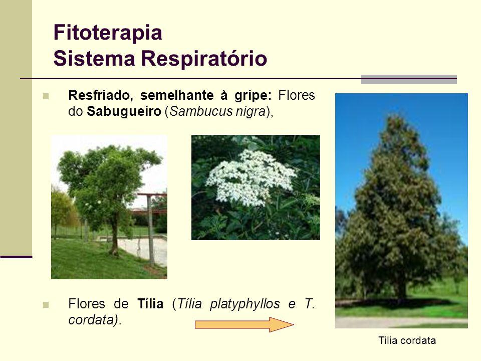 Fitoterapia Sistema Respiratório Resfriado, semelhante à gripe: Flores do Sabugueiro (Sambucus nigra), Flores de Tília (Tília platyphyllos e T. cordat
