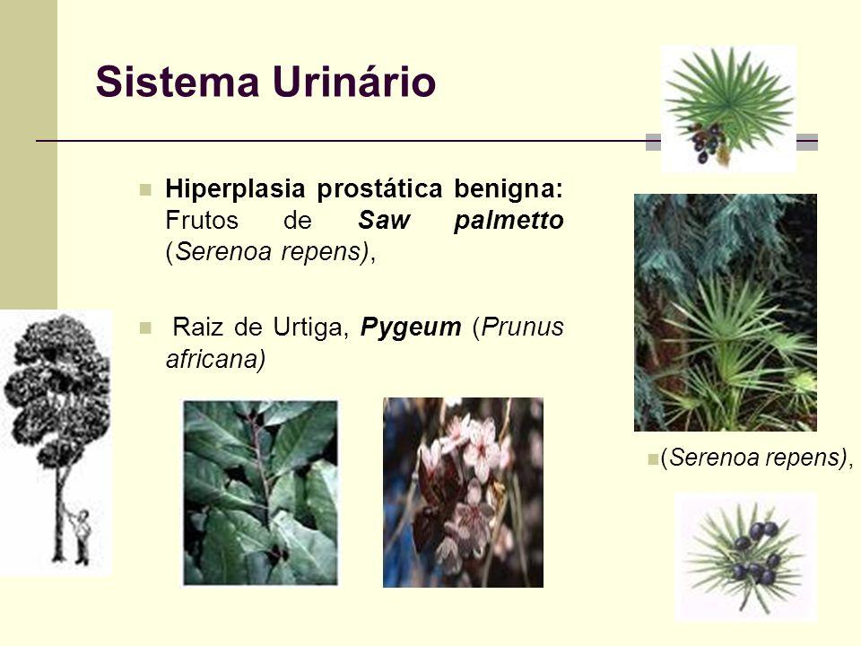 Sistema Urinário Hiperplasia prostática benigna: Frutos de Saw palmetto (Serenoa repens), Raiz de Urtiga, Pygeum (Prunus africana) (Serenoa repens),