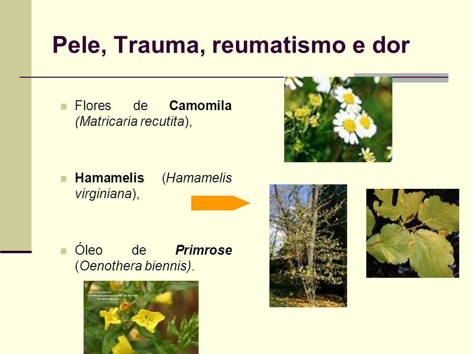Pele, Trauma, reumatismo e dor Flores de Camomila (Matricaria recutita), Hamamelis (Hamamelis virginiana), Óleo de Primrose (Oenothera biennis).