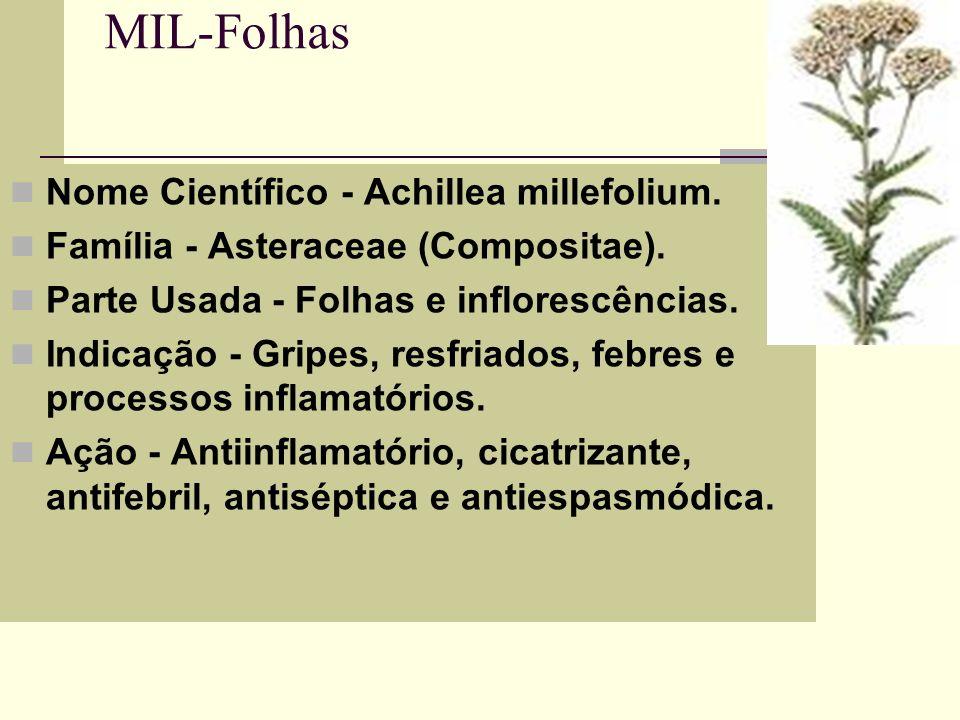 MIL-Folhas Nome Científico - Achillea millefolium. Família - Asteraceae (Compositae). Parte Usada - Folhas e inflorescências. Indicação - Gripes, resf